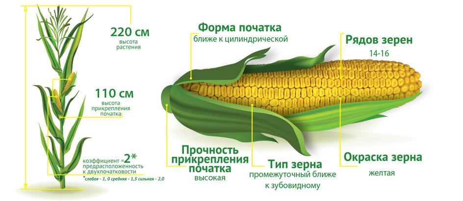 ДМС Прайм (ФАО 220)