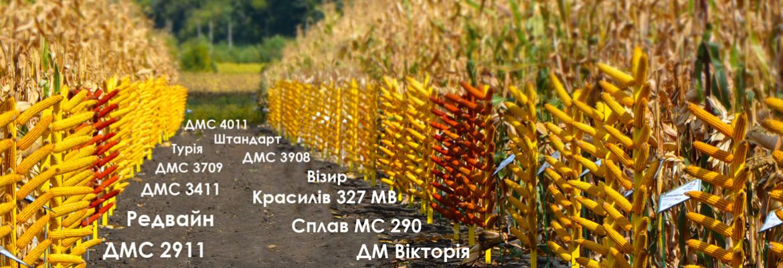Каталог семян гибридов кукурузы