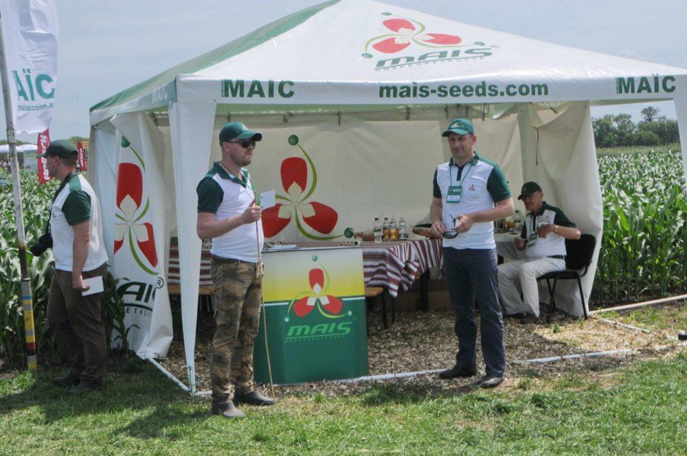 Компания Маис представила новые гибриды кукурузы | Компания МАИС