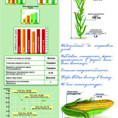 Середньоранній гібрид кукурудзи ДМ Вікторія (ФАО 290)