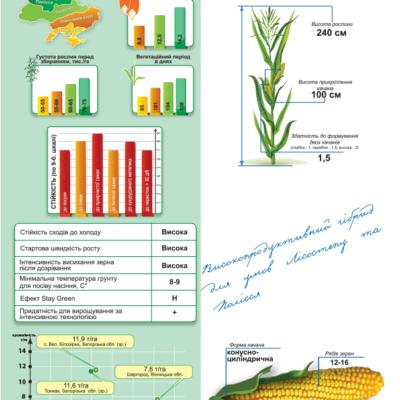 Ранньостиглий гібрид кукурудзи ДМ Унія (ФАО 190)
