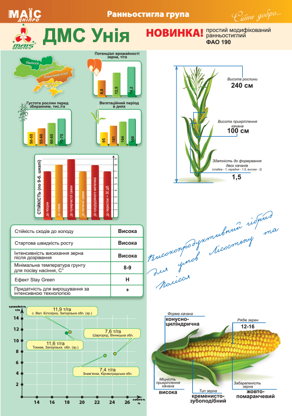 Семена кукурузы ДМС Уния (ФАО 190)