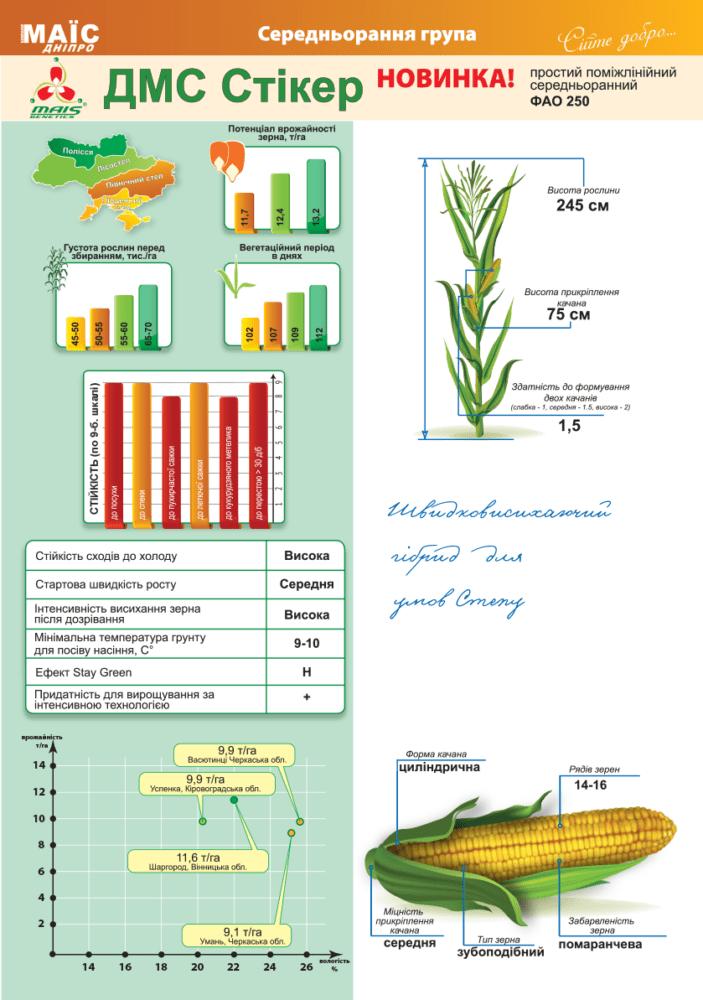 Семена гибрида кукурузы ДМ Стикер