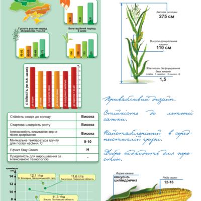 Середньостиглий гібрид кукурудзи ДМС 3015 (ФАО 300)