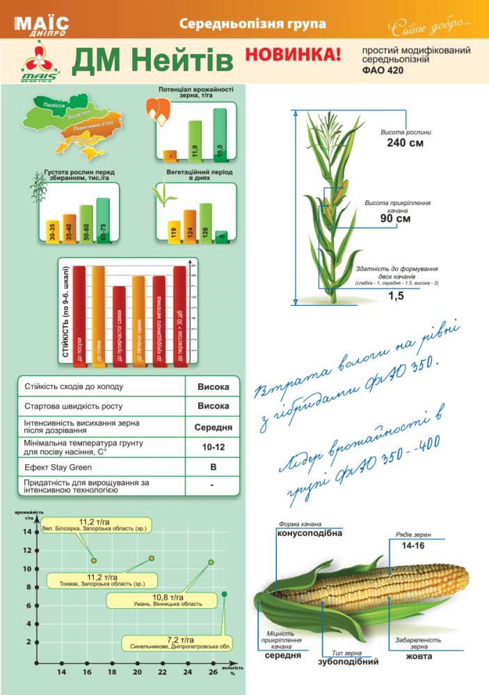 Семена кукурузы ДМ Нейтив (ФАО 420)