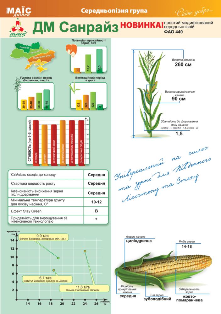Семена кукурузы ДМ Санрайз (ФАО 440)