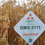 Гібриди кукурудзи Компанії МАЇС в Європі