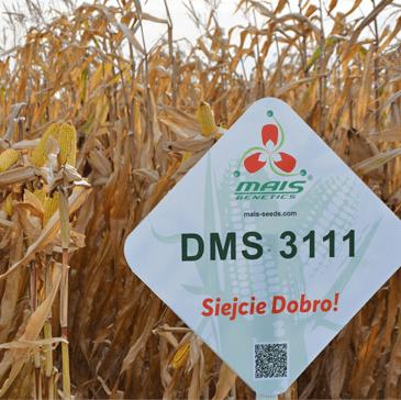 Гибриды кукурузы Компании МАИС в Европе