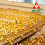 Насіння кукурудзи Маїс за спеціальною ціною!