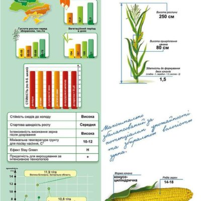 Среднеранний гибрид кукурузы ДМС 2715 (ФАО 270)