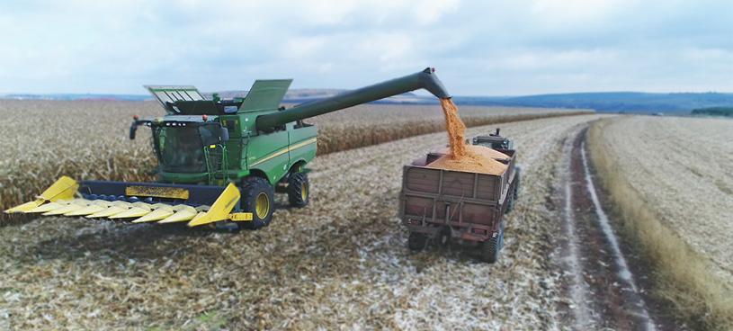 уборка кукурузы