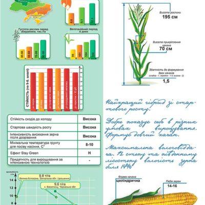 Немирів - ранньостиглий гібрид кукурузи