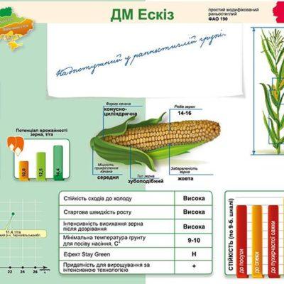 Ранньостиглий гібрид кукурудзи ДМ Ескіз (ФАО 190)