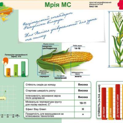 Ранньостиглий гібрид кукурудзи Мрія МС (ФАО 190)