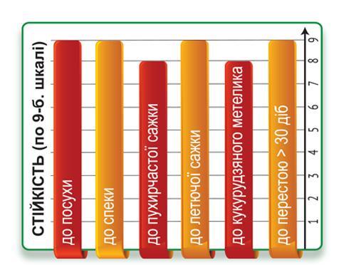 Гибрид кукурузы ДМС Сектор (ФАО ФАО 330)