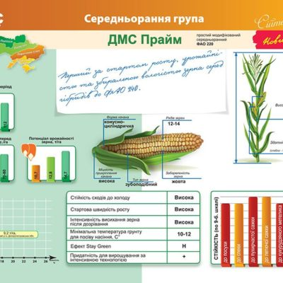 Середньоранній гібрид кукурудзи ДМС Прайм (ФАО 220)