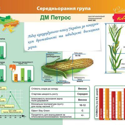 Середньоранній гібрид кукурудзи ДМ Петрос (ФАО 260)
