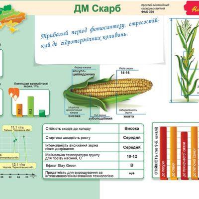 Середньостиглий гібрид кукурудзи ДМ Скарб (ФАО 330)