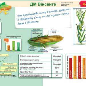 Середньопіздній гібрид кукурудзи ДМ Вінсенте (ФАО 500)