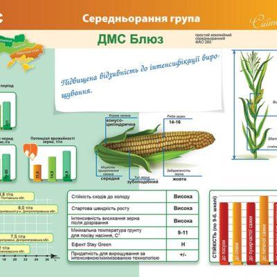 Середньоранній гібрид кукурудзи ДМС Блюз (ФАО 280)