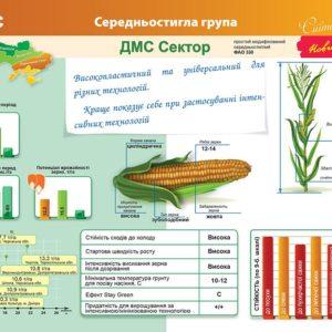 Середньостиглий гібрид кукурудзи ДМС Сектор (ФАО 330)