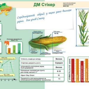 Середньоранній гібрид кукурудзи ДМС Стікер (ФАО 250)