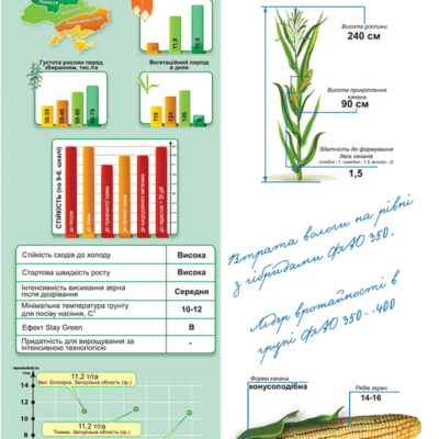 Середньопіздній гібрид кукурудзи ДМ Нейтів (ФАО 420)