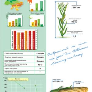 Середньопіздній гібрид кукурудзи ДМ Санрайз (ФАО 440)