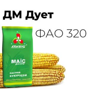 Среднеспелый гибрид кукурузы ДМ Дует (ФАО 320)
