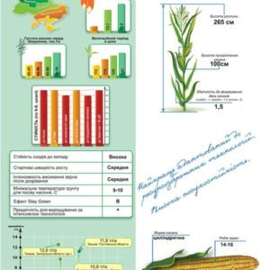 Среднеспелый гибрид кукурузы ДМ Конфес (ФАО 350)