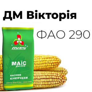 ДМ Вікторія (ФАО 290) Середньоранній гібрид кукурудзи