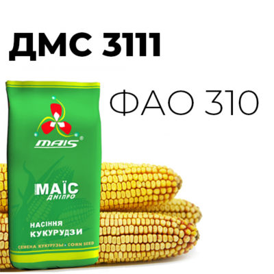 ДМС 3111 (ФАО 310) Середньостиглий гібрид кукурудзи