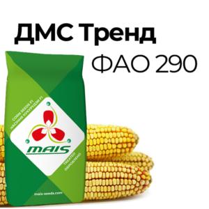 Среднеранний гибрид кукурузы ДМС Тренд (ФАО 290)