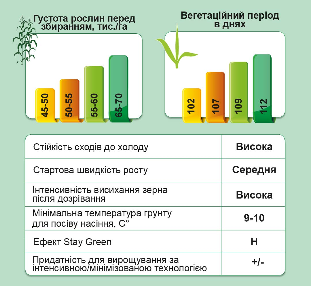 ДМС Стікер (ФАО 250) Середньоранній гібрид кукурудзи
