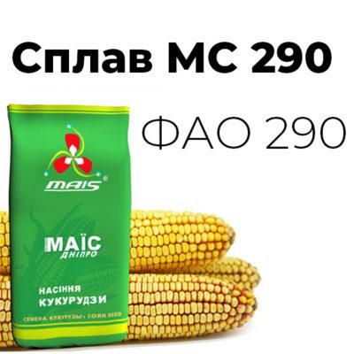 Среднеранний гибрид кукурузы Сплав МС 290 (ФАО 290)