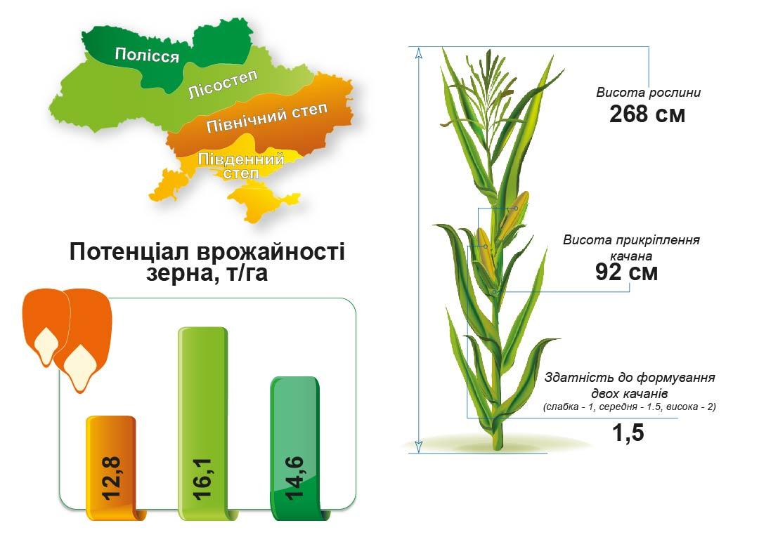 ДМС Тренд (ФАО 290) Середньоранній гібрид кукурудзи