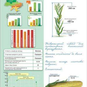 Среднеспелый гибрид кукурузы ДМ Бенефис (ФАО 320)