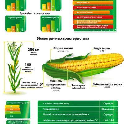 Среднеспелый гибрид кукурузы ДМС 3411 (ФАО 360)