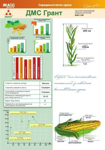 Середньостиглий гібрид кукурудзи ДМС Грант (ФАО 340)