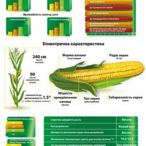 Середньостиглий гібрид кукурудзи Візир (ФАО 350)
