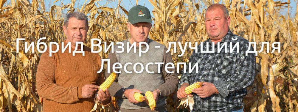 Среднеспелый гибрид кукурузы Визир (ФАО 350)