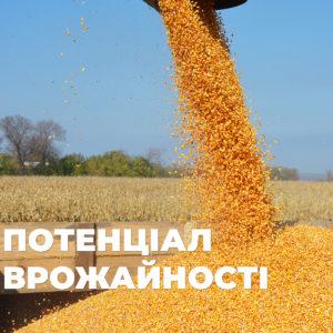 Есть вопрос: Потенциал урожайности гибридов кукурузы