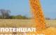 Є питання: Потенціал врожайності гібридів кукурудзи